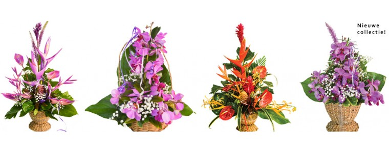 Deliver flowers in Suriname
